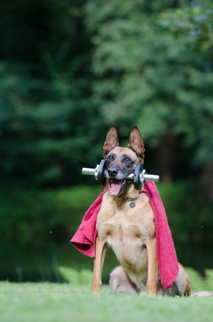 trick-dog-trick-malinois-dog-show-trick-37735-large