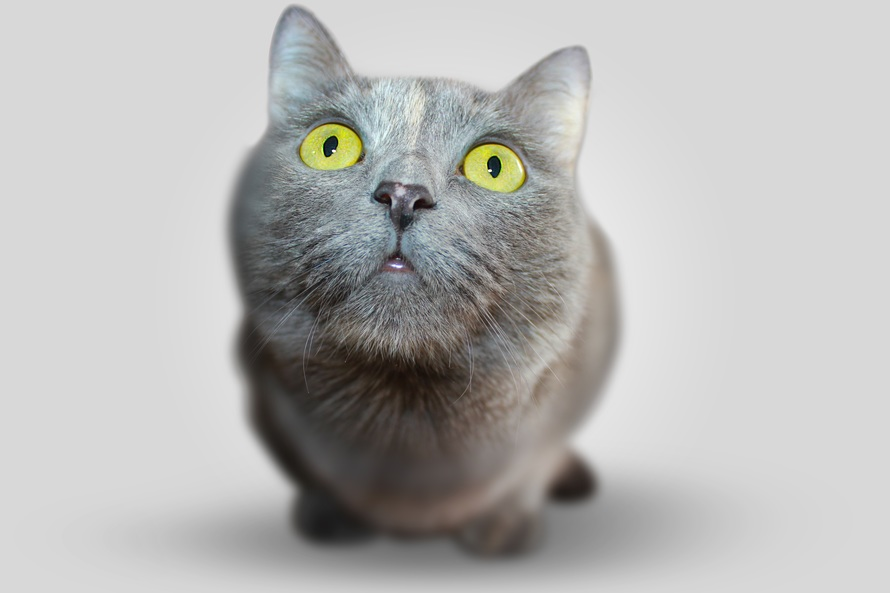 cat-animal-eyes-grey-54632-large