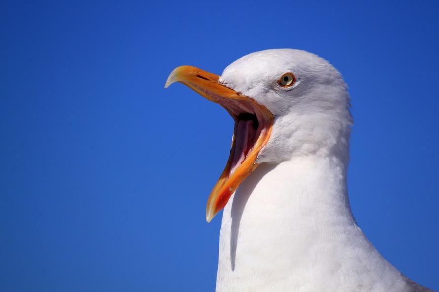 seagull-sky-holiday-bird-56618-large